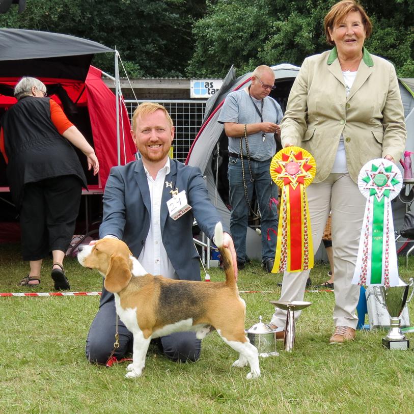 Bedst i racen på stor beagle udstilling